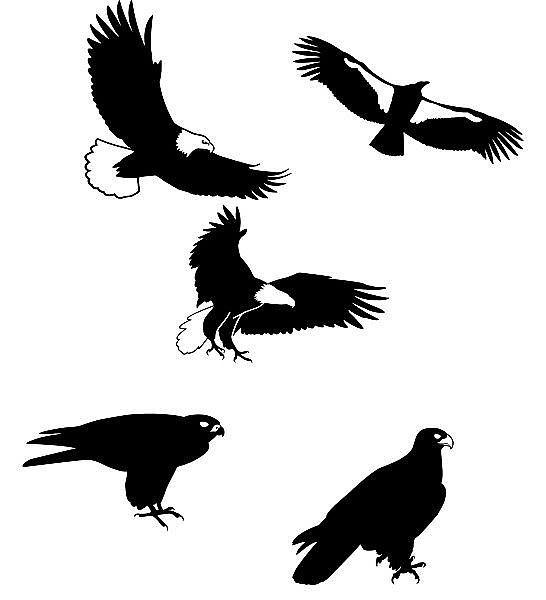 Vogel-Silhouetten im Set mit Motiv: Greifvögel - große Größe