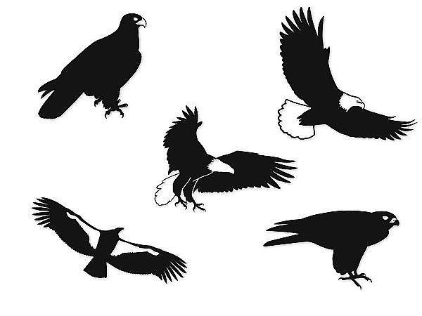 Vogel-Silhouetten im Set mit Motiv: Greifvögel - kleine Größe